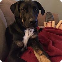 Adopt A Pet :: Captain Hook - Holly Springs, NC