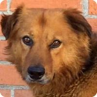 Adopt A Pet :: ANTONIO (video) - Los Angeles, CA