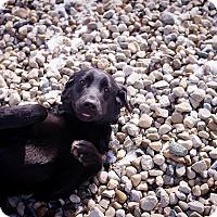 Adopt A Pet :: Jasminique - Lewisville, IN