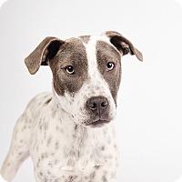Adopt A Pet :: Jubilee - Ogden, UT