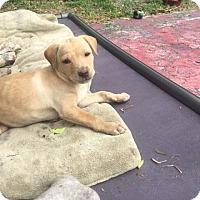 Adopt A Pet :: salina - MIAMI, FL
