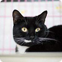 Adopt A Pet :: Tuna - Orleans, VT