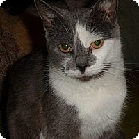 Adopt A Pet :: Martha - Oxford, NY