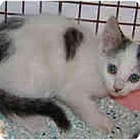 Adopt A Pet :: One Spot - Dallas, TX