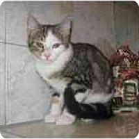 Adopt A Pet :: Mason - Catasauqua, PA