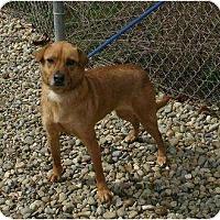 Adopt A Pet :: Baby - Toronto/Etobicoke/GTA, ON