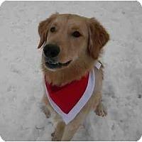Adopt A Pet :: Solly - Rigaud, QC