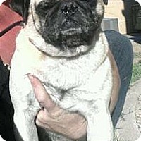 Adopt A Pet :: Sebastian - Scottsdale, AZ
