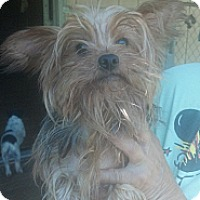 Adopt A Pet :: Delilah - Crump, TN
