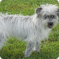 Adopt A Pet :: Possum - Brattleboro, VT