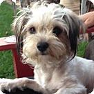 Adopt A Pet :: Maya