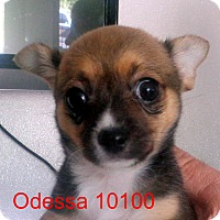 Adopt A Pet :: Odessa - baltimore, MD