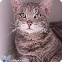 Adopt A Pet :: Foster - Merrifield, VA
