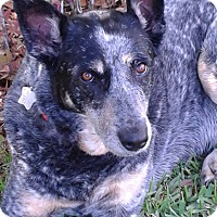 Adopt A Pet :: Mama D - New Orleans, LA
