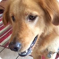 Adopt A Pet :: Woody - Brattleboro, VT