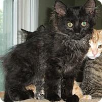 Adopt A Pet :: Loki - Colmar, PA