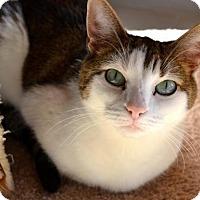 Adopt A Pet :: Lily - Spring Lake, NJ