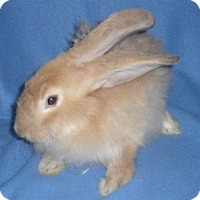 Adopt A Pet :: Fuzzy - Woburn, MA