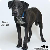 Adopt A Pet :: Buster (Foster) - Baton Rouge, LA