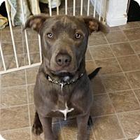 Adopt A Pet :: Remi - Lodi, CA