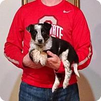 Adopt A Pet :: Mylo - New Philadelphia, OH