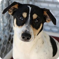 Adopt A Pet :: Shorty - Picayune, MS