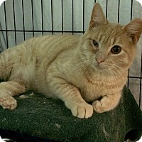 Adopt A Pet :: Tango - East Brunswick, NJ