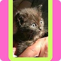 Adopt A Pet :: Miracle - Milton, GA