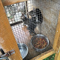 Adopt A Pet :: Stubby - Panama City, FL