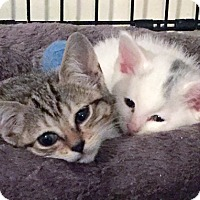 Adopt A Pet :: Winnie and Jujubee, Wee Bonded Best Friends - Brooklyn, NY