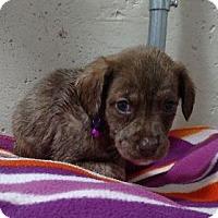 Adopt A Pet :: Flo - Hillside, IL