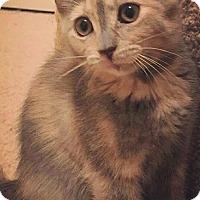 Adopt A Pet :: Topaz - Garner, NC