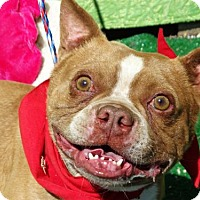 Adopt A Pet :: Rocky - Vacaville, CA