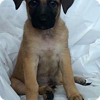 Adopt A Pet :: Blaze - Mooresville, NC