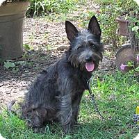 Adopt A Pet :: BRUCE WAYNE - Hartford, CT