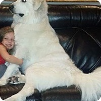 Adopt A Pet :: Olaf - Claremont, NC