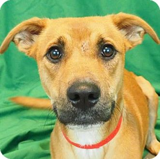 Hound (Unknown Type) Mix Dog for adoption in New Orleans, Louisiana - Miah