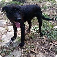 Adopt A Pet :: Rags meet me 10/28 - Manchester, CT