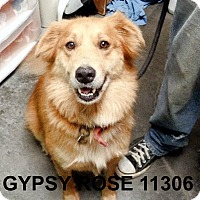Adopt A Pet :: Gypsy Rose - Alexandria, VA