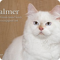 Adopt A Pet :: Palmer - Ortonville, MI
