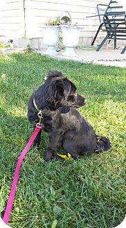 Chihuahua Mix Dog for adoption in Racine, Wisconsin - Cheech