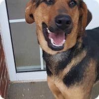 Adopt A Pet :: Princess - Burlington, NJ