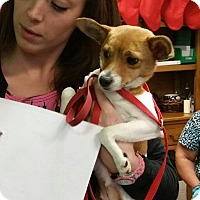 Adopt A Pet :: Zoe - Reno, NV