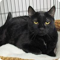Adopt A Pet :: Phillip - Reeds Spring, MO