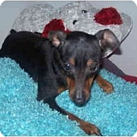 Adopt A Pet :: Sonia - Grove City, OH
