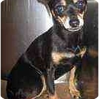 Adopt A Pet :: Skippy - Summerville, SC