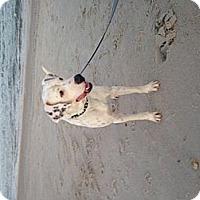 Adopt A Pet :: Oakley - Tampa, FL