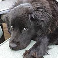 Adopt A Pet :: JAYDA - Raleigh, NC