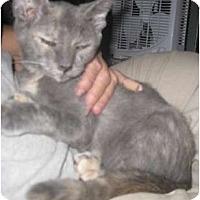 Adopt A Pet :: Prism - Dallas, TX
