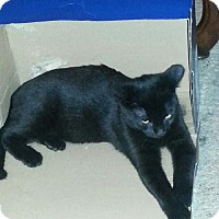 Adopt A Pet :: Jessie - Youngsville, LA